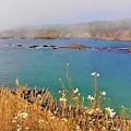 Mendocino Headlands by Lisa Dunn