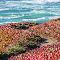 Mendocino Pathway To Beach by Donnie Whitaker