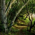 Mendoza Trail by Joe Azevedo