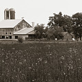 Mennonite Farm - Brown And White Field by Susan Arness