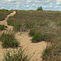 Mentor Headlands Beach Trail by Brian M Lumley