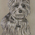 Mercedes The Shih Tzu by Larry Whitler