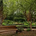 Botanic Garden by Judy Vincent