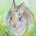 Meriwether Cottontail by Marsha Karle