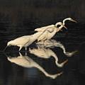 Merritt Island Egrets by John R Young Jr