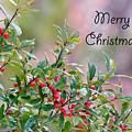 Merry Christmas - Berries by Kerri Farley