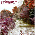 Merry Christmas Colours And Snow by Cathy Beharriell