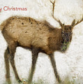 Merry Christmas Elk Greeting Card by Belinda Greb