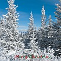 Merry Christmas From Colorado by Cascade Colors