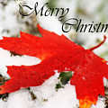 Merry Christmas Leaf by Cathy Beharriell