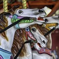 Merry Go Round Horses by Mary Ourada