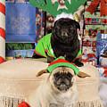 Merry Pug-mas by Trish Tritz