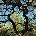 Mesquite Window by Bonnie See