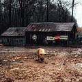 Messy Pig Farm Lot by John Myers