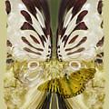 Metamorphosis by Chuck Brittenham