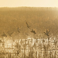 Metzgers Marsh In Fog by Charles Owens
