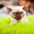 Mew Kitty Funny Mad Face by Arletta Cwalina