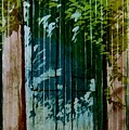 Mexican Doors by Robert D McBain