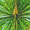 Mexican Fan Palm Leaf by Dana Roper
