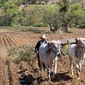 Mexican Farmer by Jim West
