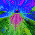 Mexican Petunia Abstract by J M Farris Photography