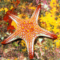 Mexico, Gulf Sea Star by Dave Fleetham - Printscapes