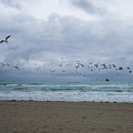 Miami Beach Flock Of Birds Flying by Toby McGuire