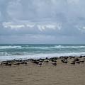 Miami Beach Flock Of Birds by Toby McGuire
