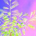 Miami Fern by Tracy Daniels