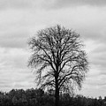 Michigan Lonley Tree  by John McGraw