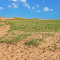 Michigan Sand Dune Landscape In Summer by Dan Sproul