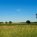 Michigan Summer Fields by Susan Wyman