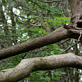 Michigan Woods 2 by Linda Shafer