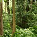 Michigan Woods 3 by Linda Shafer