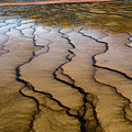 Microbial Mat Of The Grand Prismatic Spring by Jennifer Ancker