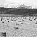 Mid June Colorado Hay  And The Twin Peaks Longs And Meeker Bw by James BO  Insogna