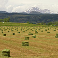 Mid June Colorado Hay  And The Twin Peaks Longs And Meeker by James BO Insogna