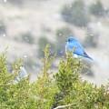 Mid-winter Blues by Brenda Pressnall