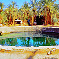 Midday At The Oasis by Dominic Piperata