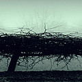 Middlethorpe Tree In Fog Gray And Green Panorama by Tony Grider