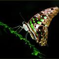 Midnight Butterfly by Joann Long