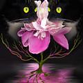 Midnight Dance by Billie Jo Ellis