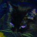 Midnight Glow by Aliceann Carlton