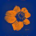 Midnight Orange Passion Flower by Art by MyChicC