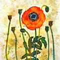 Midsummer Poppy by Moon Stumpp