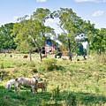 Midwest Cattle Ranch by Scott Hansen