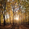 Midwest Forest by Steve Gadomski