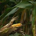 Midwest Harvest by Steve Gadomski