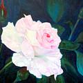 Midnight Rose by John Gabb