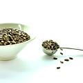 Milk Thistle Seeds by Caroline Reyes-Loughrey